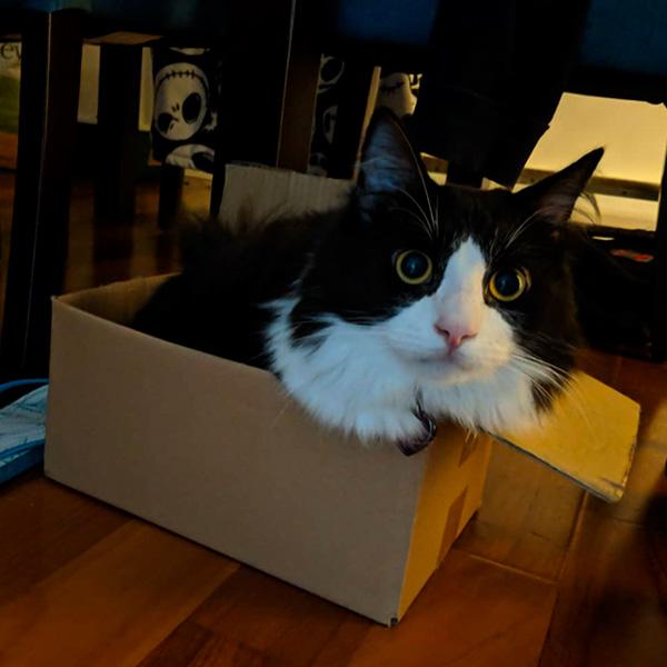 Черно-белый кот в коробке