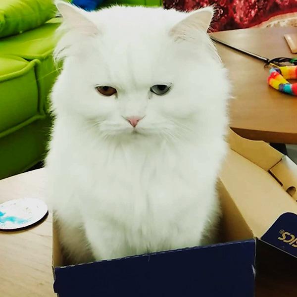 Грустный белый котик в коробке