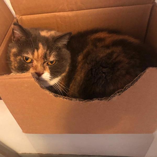 Злой кот в коробке