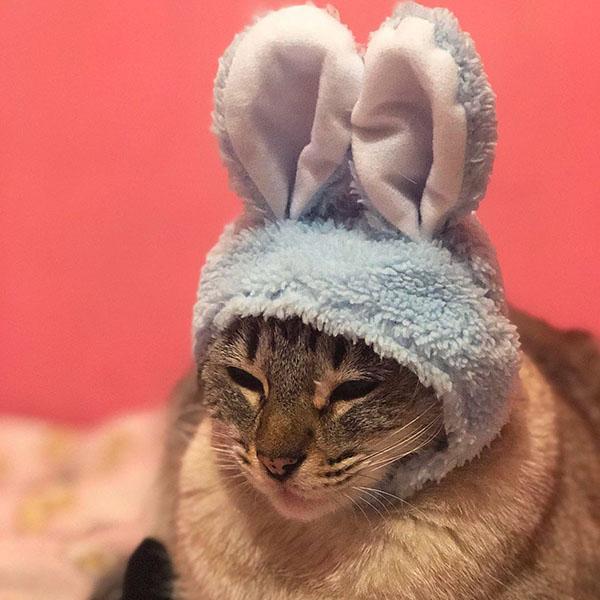 Кот в шапочке зайчика