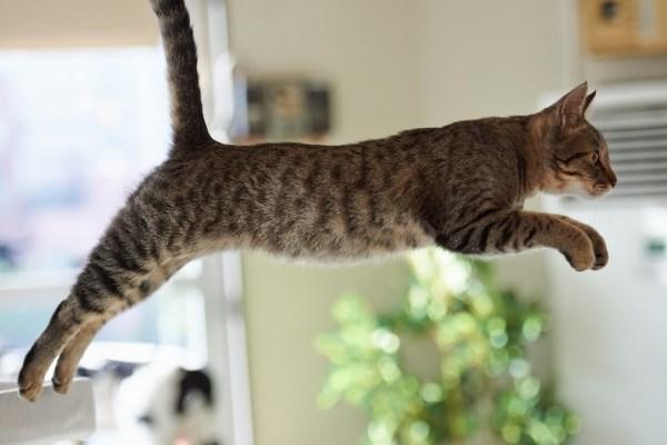 Кот прыгает