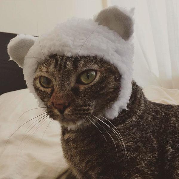 Котик в шапочке овечки