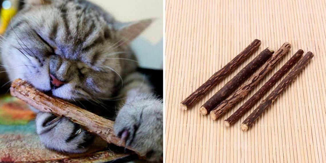 Палочки для чистки зубов кошки