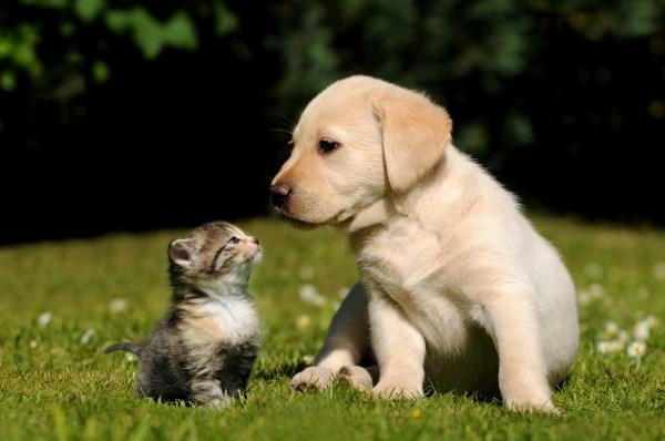 Дружба котенка и щенка