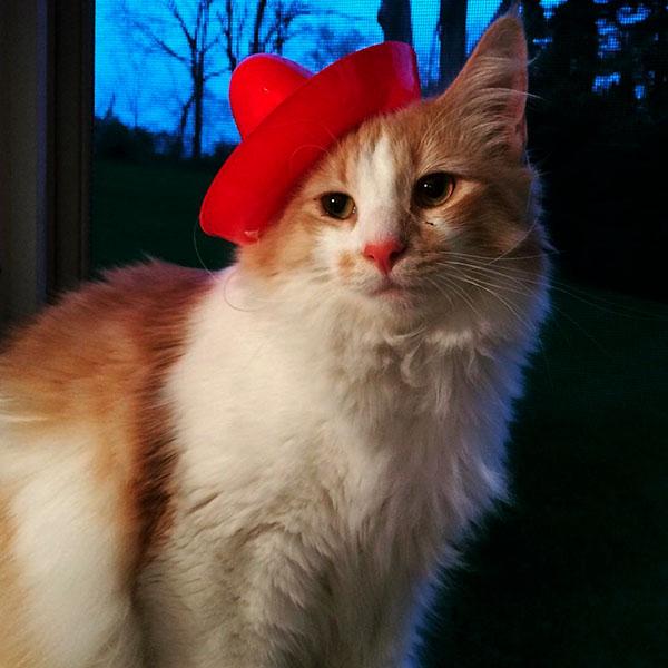 Кот в красной шапке