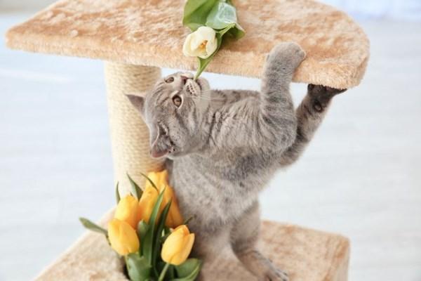 Приучение котёнка к когтеточке