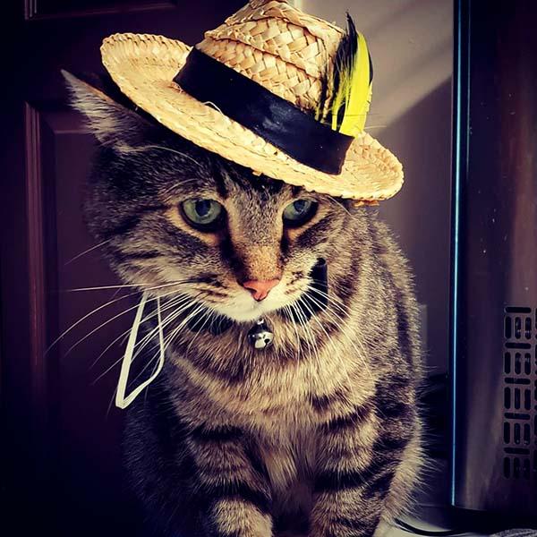 Котик в соломенной шляпе