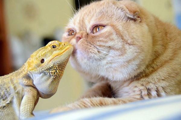Кот и игуана