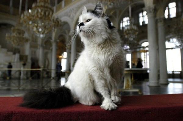 Эрмитажный кот во дворце