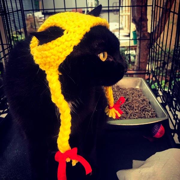 Котик в желкой шапочке