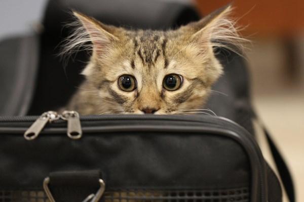 Испуганный кот в переноске