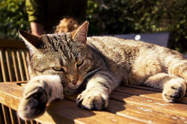 кошка грустно лежит