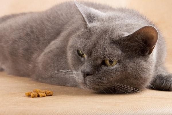 кот ничего не ест