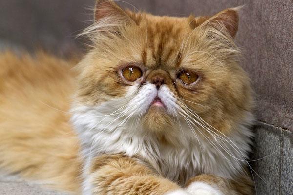 персидская кошка с листьями