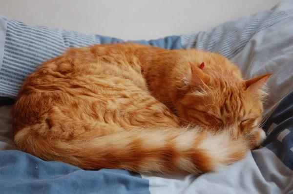 Кот спит клубочком