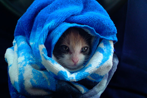 Котенка завернули в полотенце