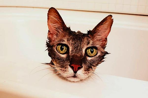 Котик смирился с мытьем