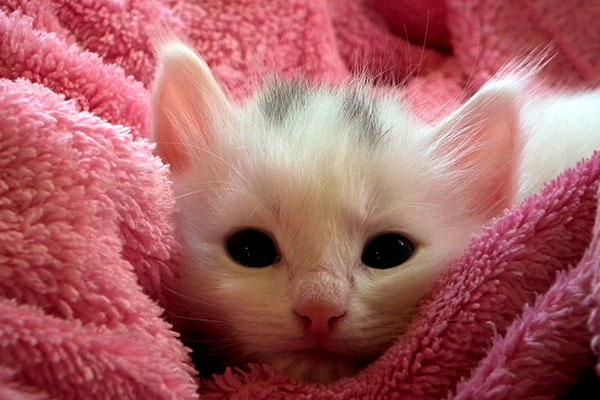 Котенок лежит в полотенце