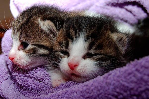 Маленькие котята после ванной