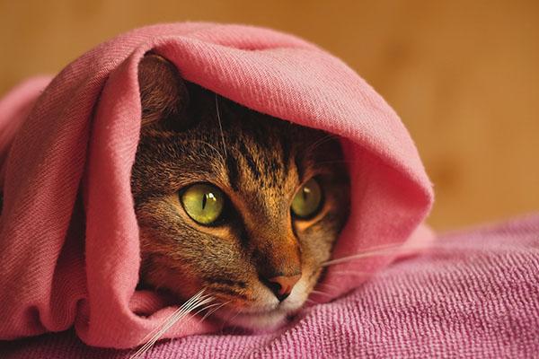Кошка после ванной