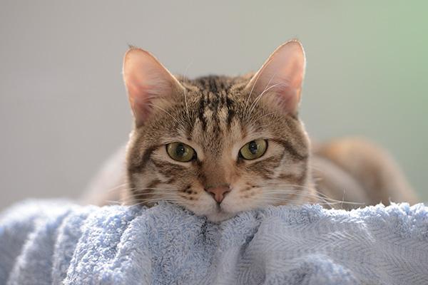 Кот лежит на полотенце