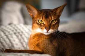 Как выбрать породу кошки которая подходит именно вам