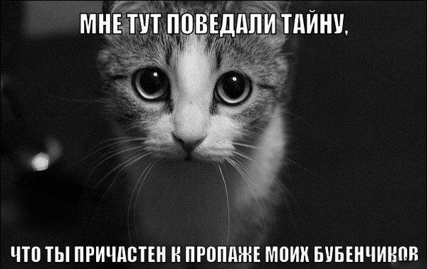 Кот узнал страшную тайну