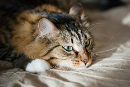 Что делать, если у кошки глисты