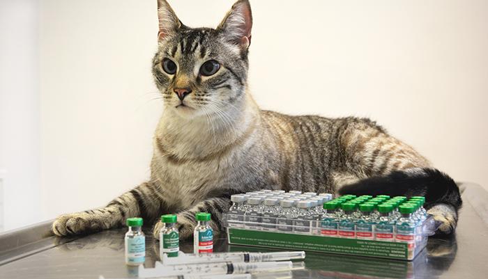 Вакцинация котов