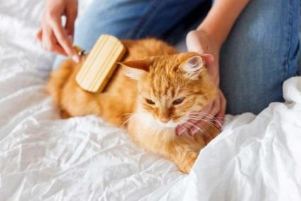 Как правильно вычесать шерсть у кошки