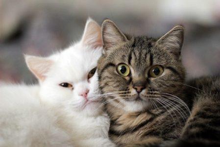 В России больше всех в мире любят кошек
