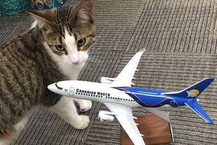 В аэропорту Нью-Йорка неделю ловили сбежавшую кошку
