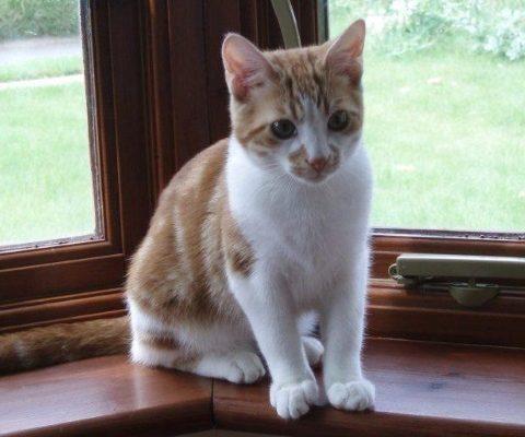 Кот ушел погулять на 10 лет