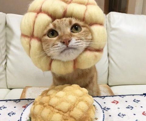 Смешные кошки 15 фото + видео