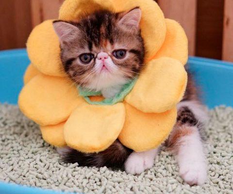 15 фото милых котиков экзотиков
