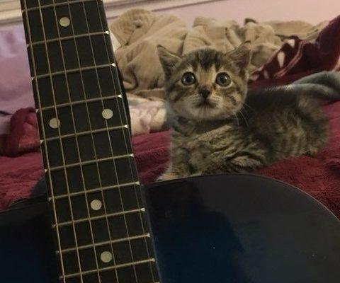 Спасенный котёнок любит спать под гитару