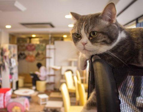 Кошки предчувствуют землетрясения: видео из Японии
