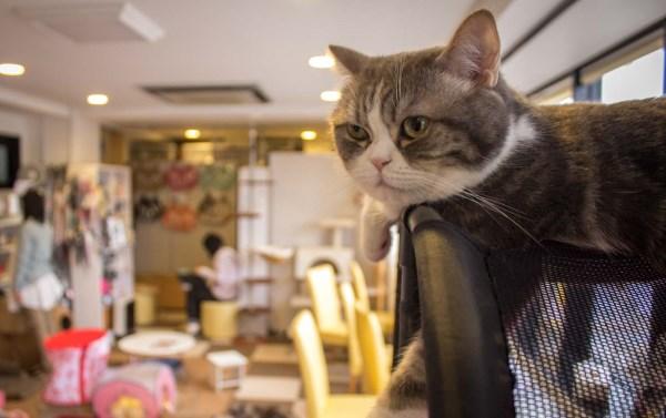 Кошки умеют предчувствовать землетрясения