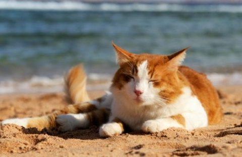 Как помочь кошке в летнюю жару