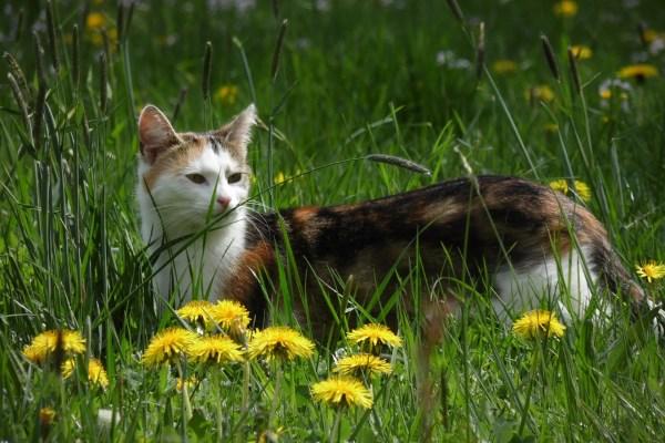Клещ у кошки на хвосте