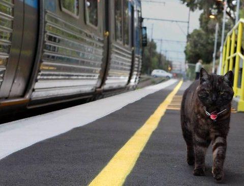 Теперь животные ездят в поездах сами