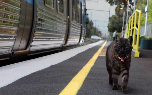 Кот может ехать в поезде один