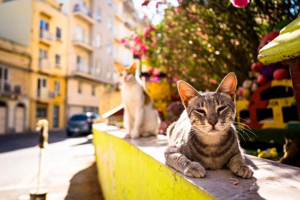 Коты пекутся на солнце