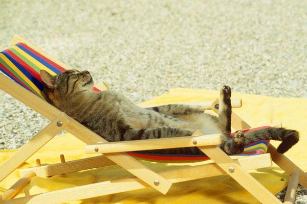 Кот лежит на пляже