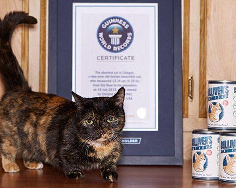 Кошки в книге рекордов Гиннесса