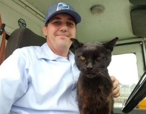 Кошка любит обниматься с почтальоном