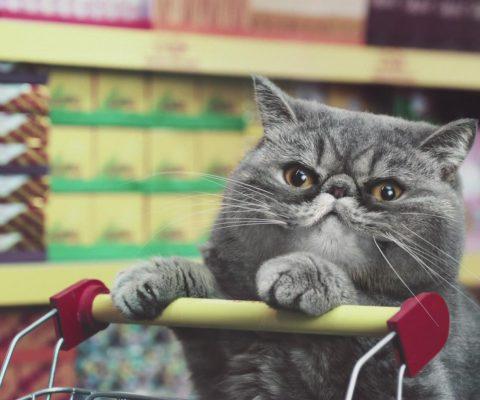 13 полезных товаров для кошек с Алиэкспресс 🛒