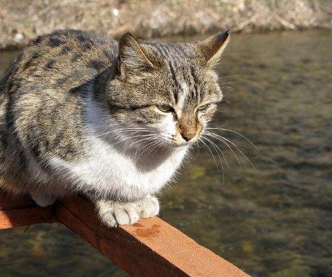 Петербуржец спас утопающую кошку