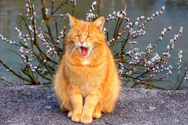 Если у кошки началась течка что делать