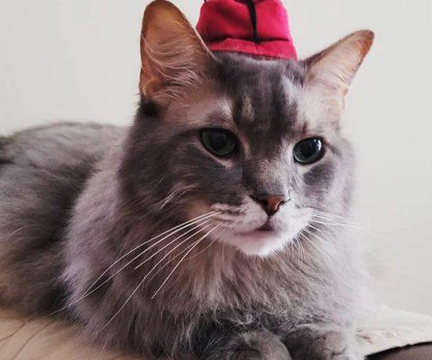 Подборка из 17 фото котиков в шапочках